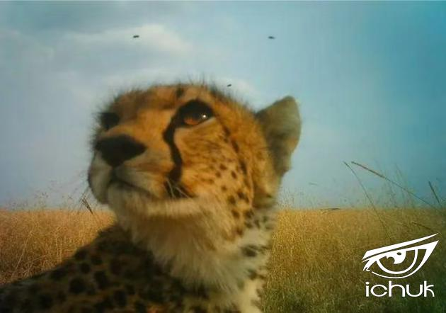 塞伦盖蒂野生动物保护区 本文图均为 DeepMind blog 图