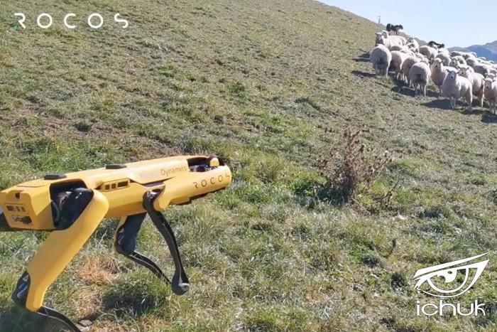 Screenshot_2020-05-23 A robot sheepdog No one wants this, says one shepherd.jpg